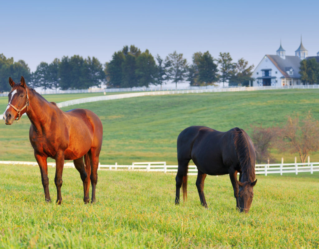 Kentucky Derby Travel Package